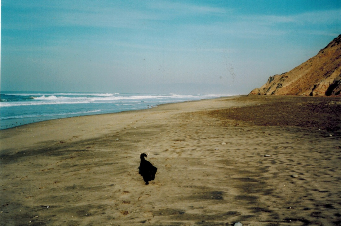 Dante on the Beach
