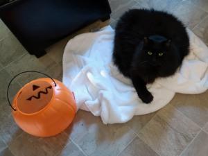 figgy halloweencrred1