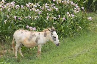 painted donkey
