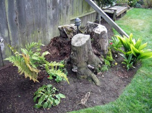 fern stump