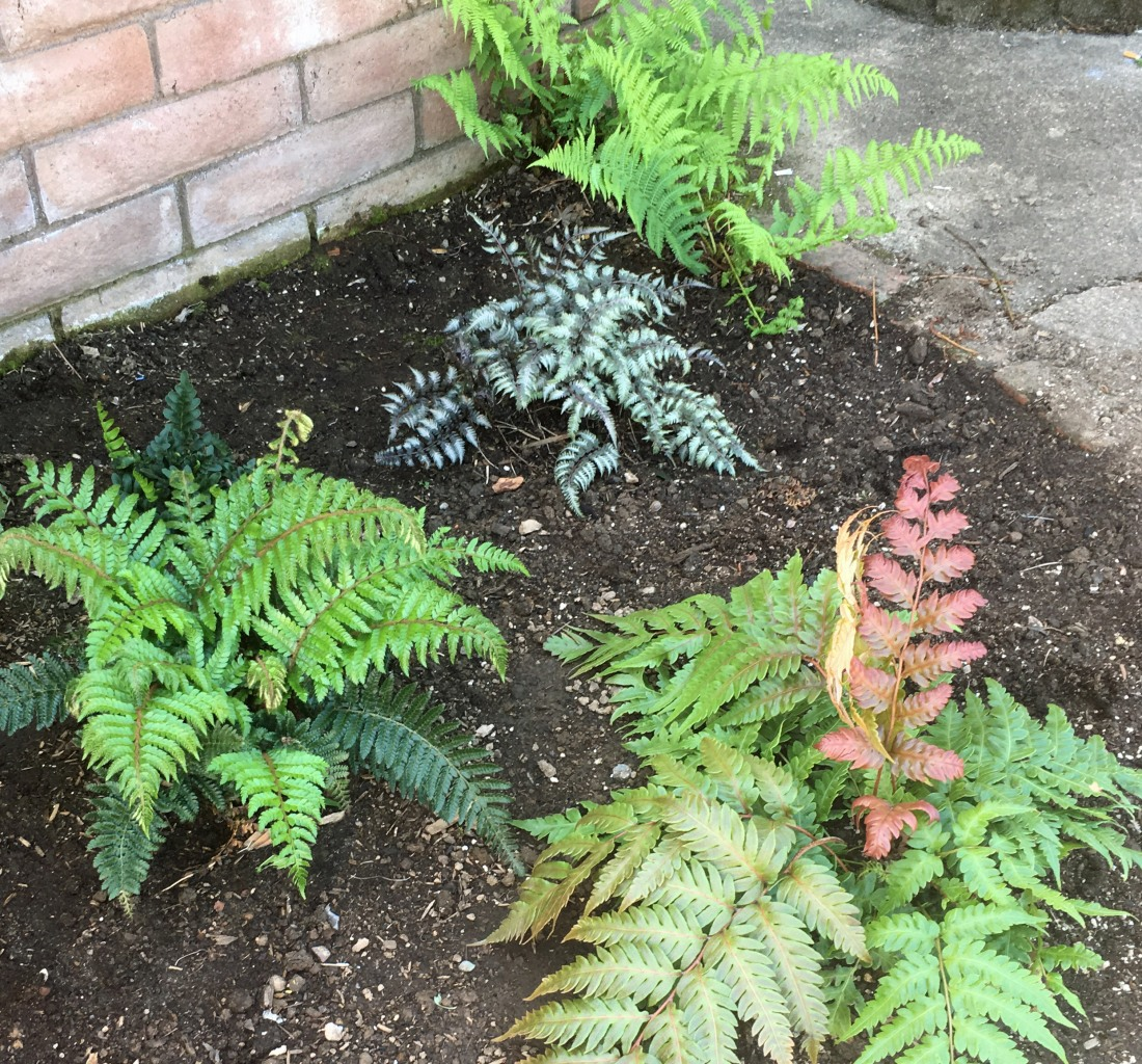 group photo ferns.jpg