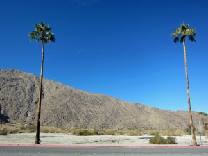 Mountain with palms