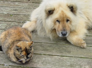 lion with cat